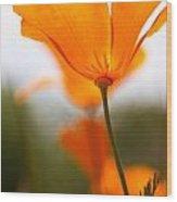 Orange Poppy In Sunlight Wood Print