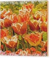 Orange Princess Fringed Tulips Wood Print