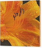 Orange Rain Wood Print by Karen Wiles