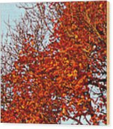 Orange Red Blanket Wood Print