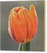 Orange Red Tulip Square Wood Print