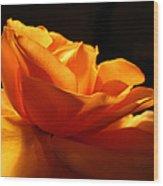 Orange Rose Glowing In The Night Wood Print