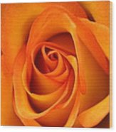 Orange Rose Wood Print