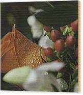Orange Rose Wood Print by Lesley Rigg