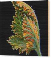 Orange Rust Wood Print