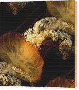 Orange Sea Nettle Wood Print