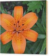 Orange Shout Wood Print