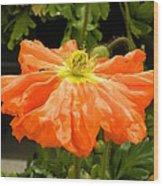 Orange Skirted Poppy  Wood Print