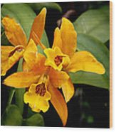Orange Spotted Lip Cattleya Orchid Wood Print