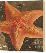 Orange Starfish In California Ocean Wood Print by Artist and Photographer Laura Wrede