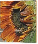 Orange Sunflower And Bee Wood Print