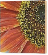 Orange Sunflower Close Up Wood Print