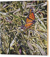 Orange Swallowtail Wood Print
