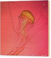 Orange Swimming Jellyfish Wood Print