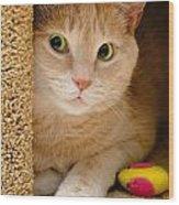 Orange Tabby Cat In Cat Condo Wood Print