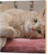 Orange Tabby Cat Lying Down Wood Print