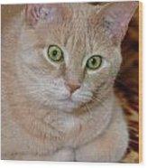 Orange Tabby Cat Poses Royally Wood Print