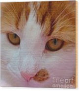 Orange Tabby Kitten Wood Print