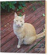 Orange Tabby On Porch Wood Print