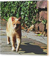 Orange Tabby Taking A Walk Wood Print