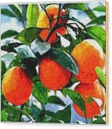 Orange Tree In Springtime  Wood Print
