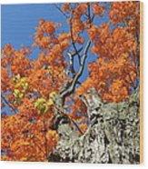 Orange Tree Wood Print