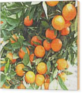 Orange Trees With Fruits On Plantation Wood Print