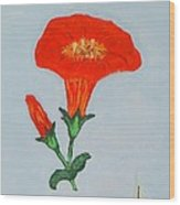 Orange Trumpet Vine Wood Print