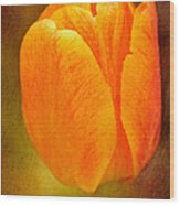 Orange Tulip Brown Texture Wood Print