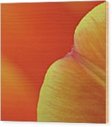 Orange Tulip Petal Detail Wood Print