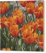Orange Tulips  Wood Print