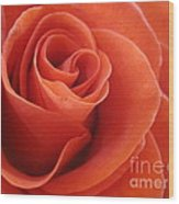 Orange Twist Rose 3 Wood Print