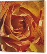 Orange Variegated Rose Wood Print