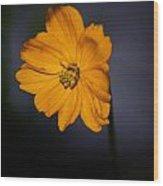 Orange Wild Flower Wood Print