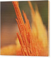 Orange Wood Fragment On Stump Wood Print