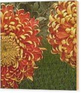 Orange-yellow Chrysanthemums Wood Print