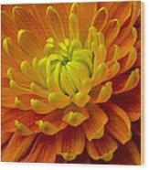 Orange Yellow Mum Wood Print