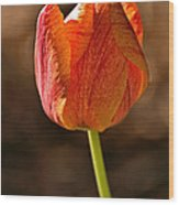Orange/yellow Tulip Wood Print
