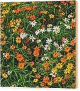 Orange Yellow White Daisies Wood Print