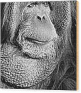 Orangutan 2 Wood Print