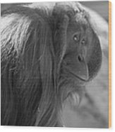 Orangutan Black And White Wood Print