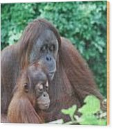 Orangutan Family Wood Print