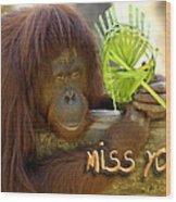 Orangutan Female Wood Print