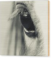 Orb Wood Print