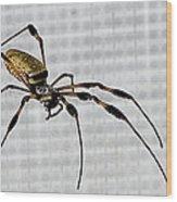 Orb Spider 4 Wood Print