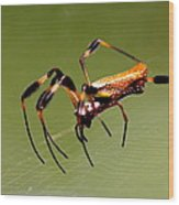 Orb Weaver - Coastal Spider Wood Print