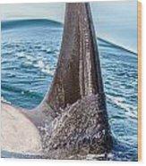Orca Apex II Wood Print