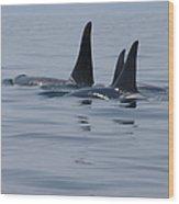 Orca Family Wood Print