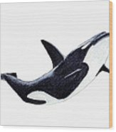 Orca - Killer Whale Wood Print