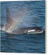 Orca Whale Surfacing Wood Print